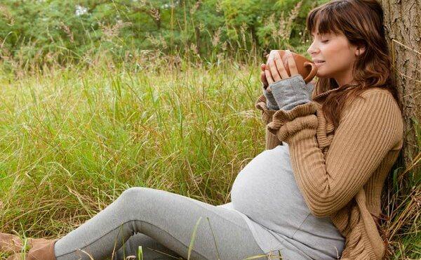 молокочай при беременности