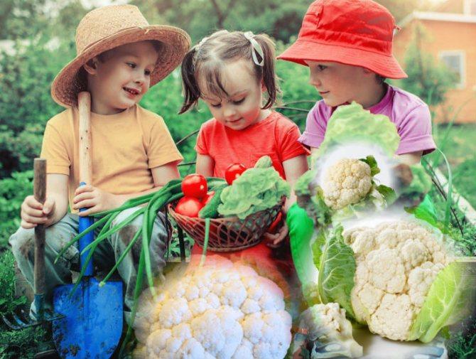 можно ли цветную капусту детям
