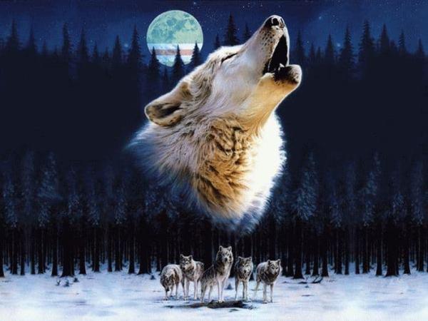 напали волки толкование сна