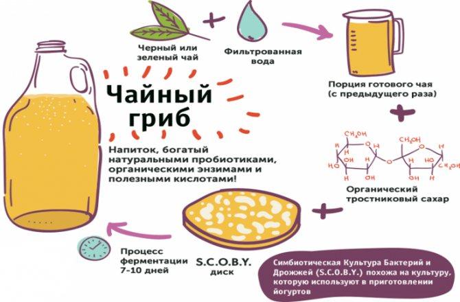 Напиток из гриба и чая