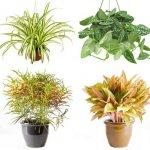 неприхотливые растения фото