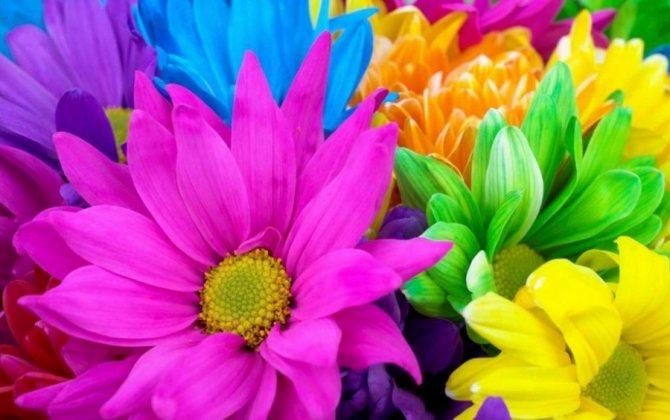 О цветах