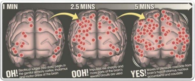 области мозга женщины, задействованные при оргазме