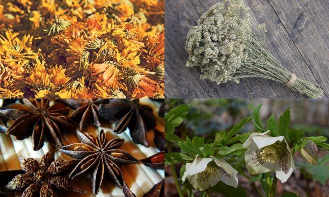 Одуванчик, анис, листья тысячелистника, морозник