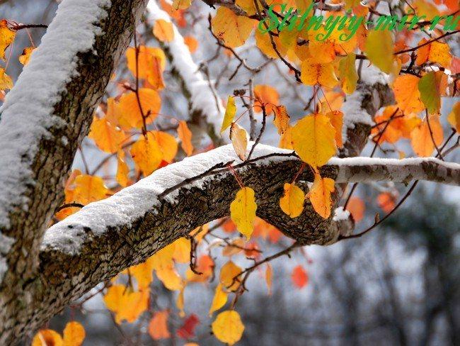 Окраска волос по лунному календарю на ноябрь 2018 благоприятные дни