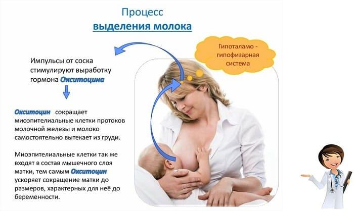 окситоцин и его влияние на молодую маму