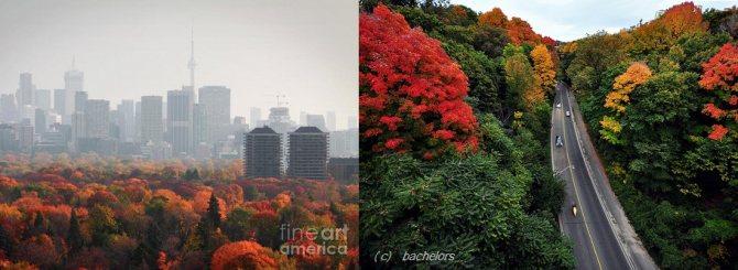 Осень в городе.jpg