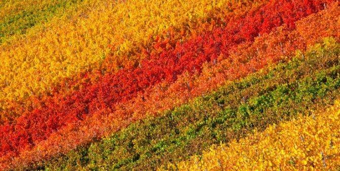 Осенняя радуга.jpg