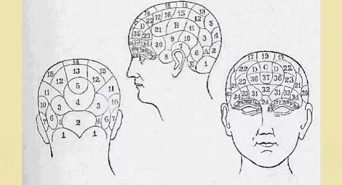 Особенности формы головы