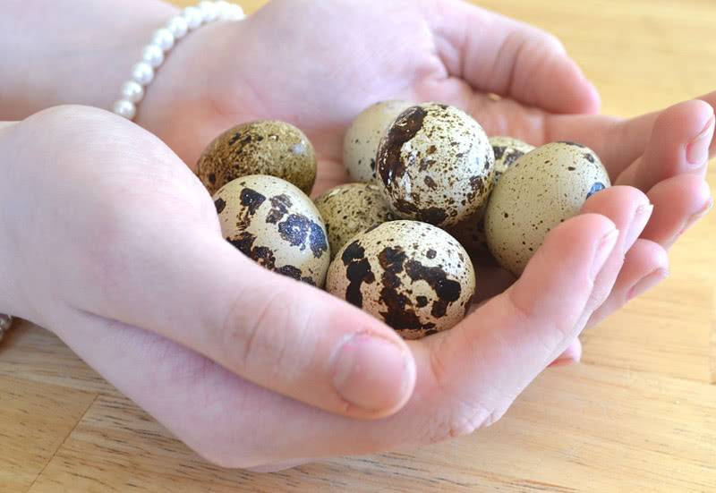Перепелиные яйца для женщин