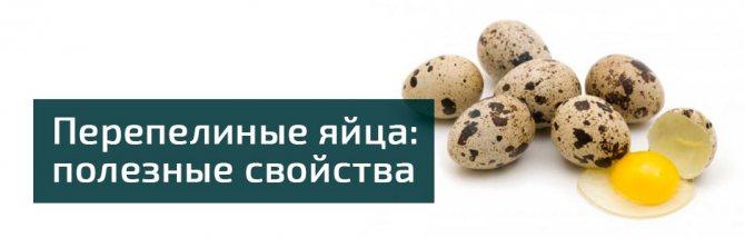 Перепелиные яйца полезные свойства