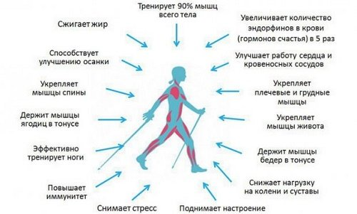 Плюсы ходьбы
