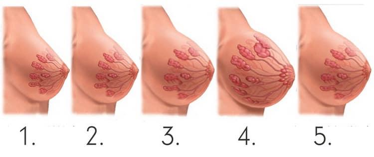 Почему болит ли грудь при беременности
