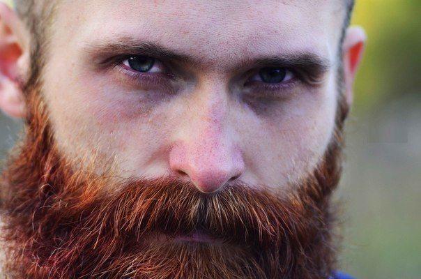 почему борода рыжеет