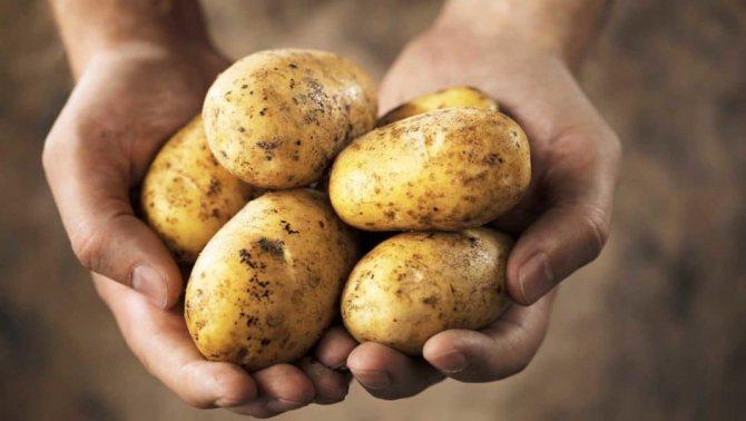 Почему нужно есть картошку?