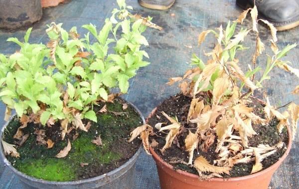 Полив-комнатных-растений-Факторы-виды-и-способы-полива-комнатных-растений-4