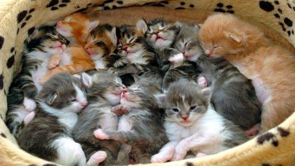 Помёт из 11 котят