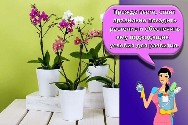 Прежде всего, стоит правильно посадить растение и обеспечить ему подходящие условия для развития.