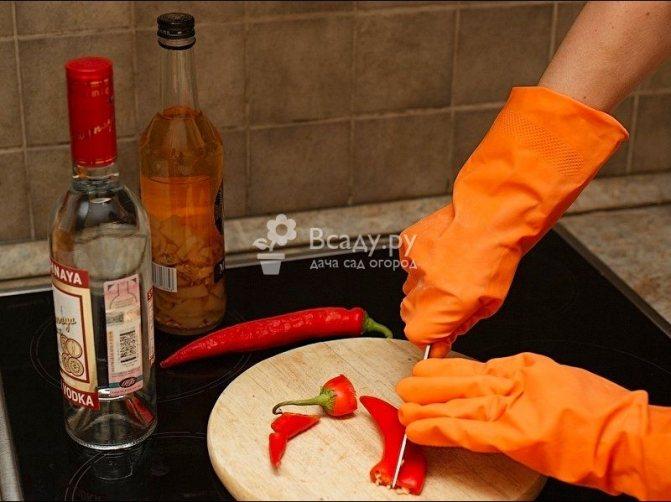 Приготовление настойки стручкового перца в домашних условиях