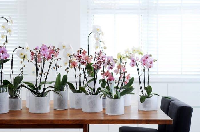 рассаженные орхидеи в горшках