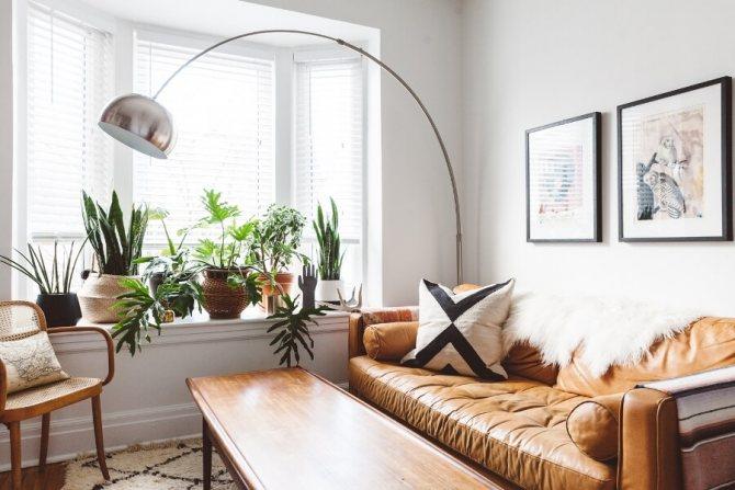Растения на подоконнике в гостиной