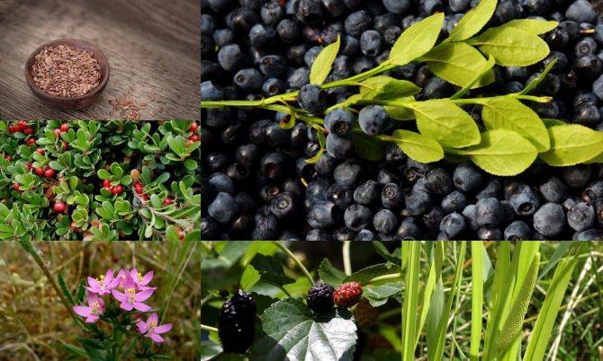 Растения понижающие уровень глюкозы