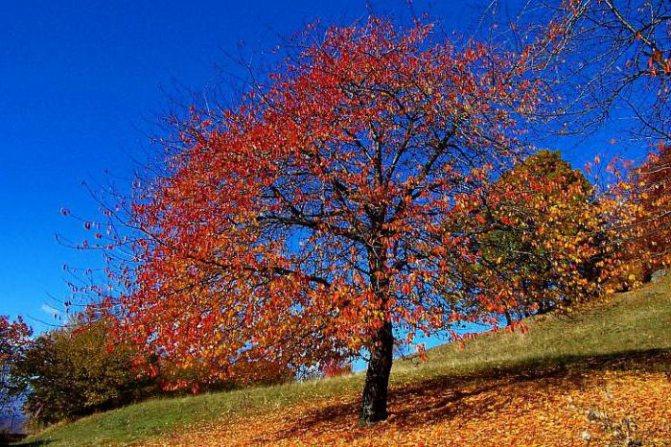 разноцветные краски осени
