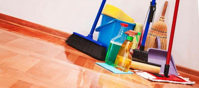 Регулярная уборка в квартире поможет предотвратить появление мокриц