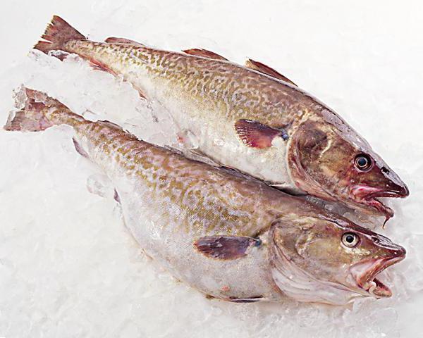 рыба снежная что это за рыба