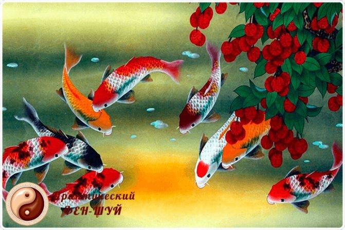 рыбки в фен-шуй