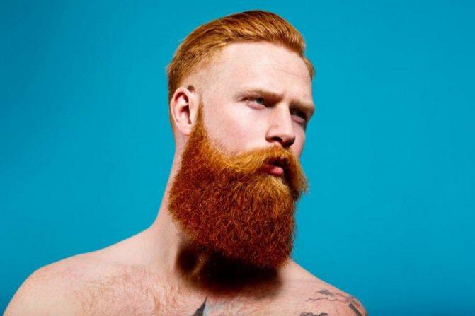 рыжеет борода