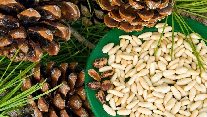 Самые полезные орехи - топ 9, фото № 3