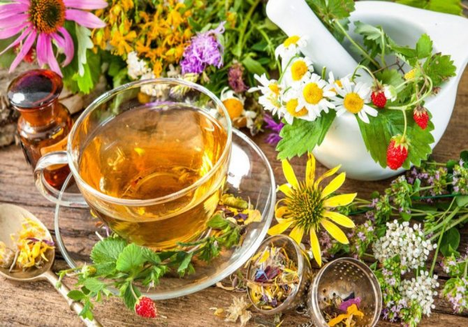 сбор сырья на чай
