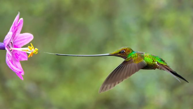 символика колибри
