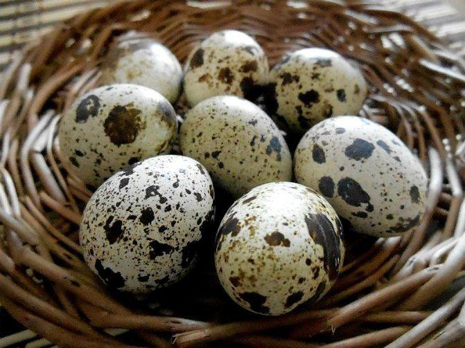 Сколько пить перепелиных яиц для потенции
