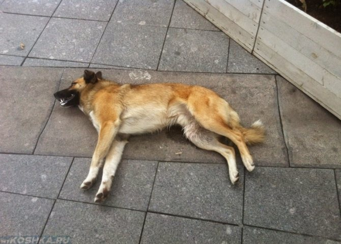 Сновидения с убийством собаки