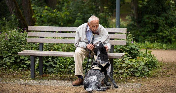 собаки подходящих пожилым людям