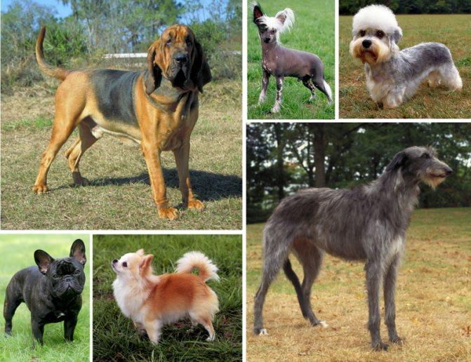 Собаки разных пород фото