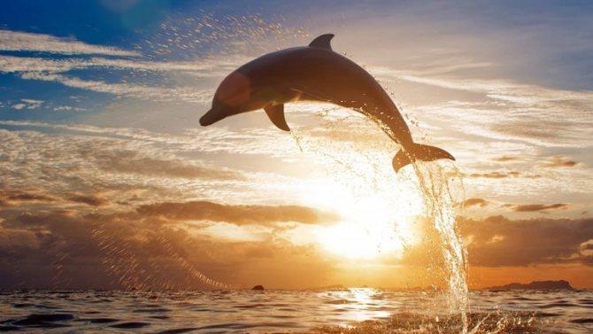 Сонник дельфины вечером