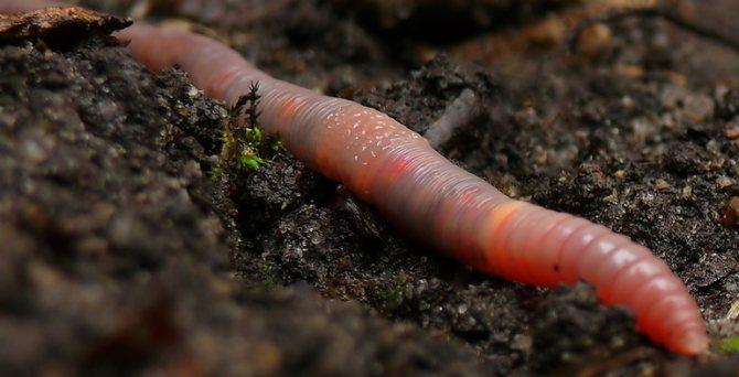 Сонник дождевые черви к чему снятся