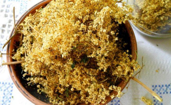 Сушеные цветки чёрной бузины