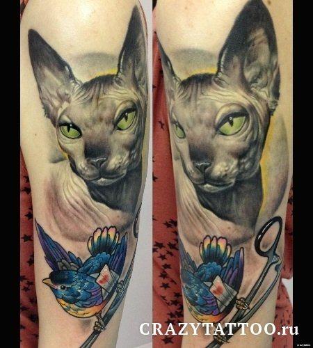Тату кот-сфинкс, Crazy Tattoo