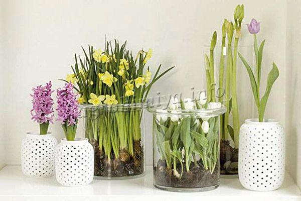 Технология выращивания комнатных растений без почвы практикуется уже давно