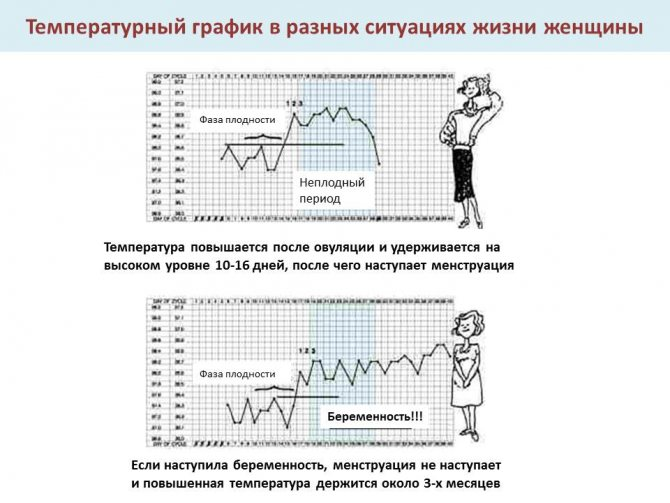 температура тела при беременности
