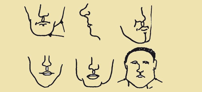 Типы челюсти и скул