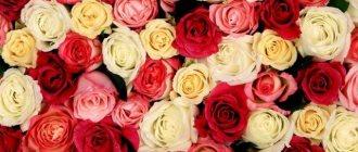 Топ 10 любимые цветы
