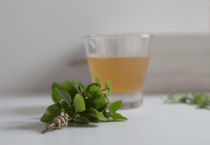 Травяной чайный гриб