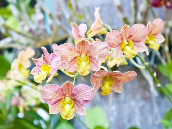 Уход за отцветшей орхидеей