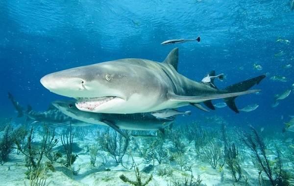 Виды-акул-Описание-названия-и-особенности-акул-12