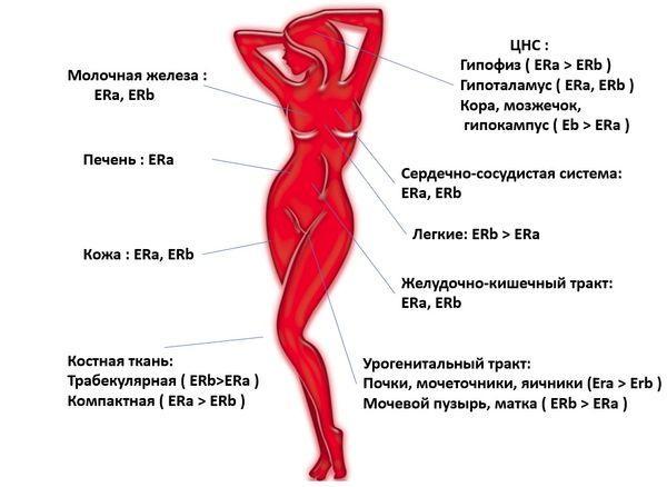 Витамины для роста грудных желез